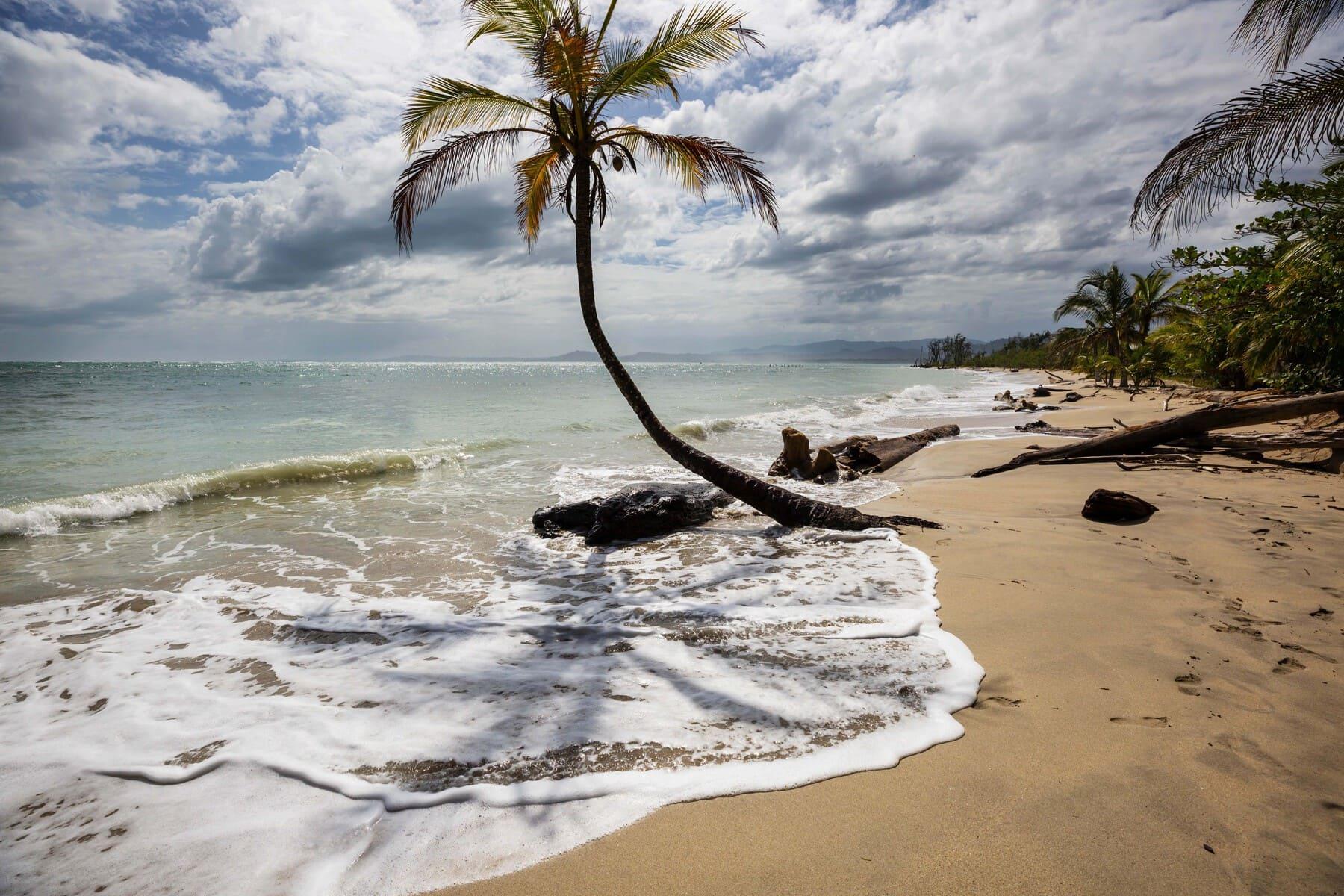 Radermacher Reisen - Strand mit Palme - Costa Rica