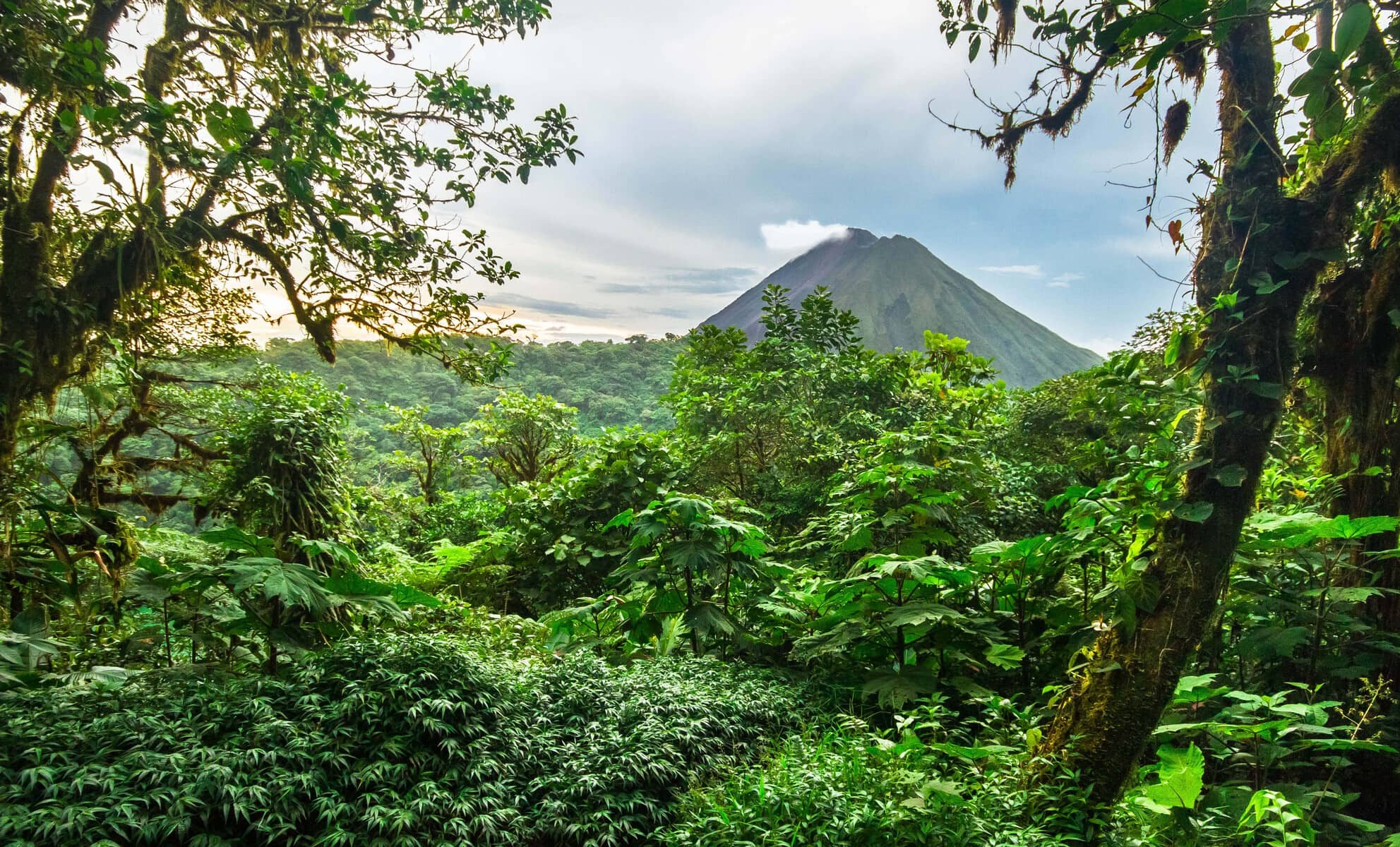 Radermacher Reisen - Regenwald im Hintergrund ein Vulkan - Costa Rica