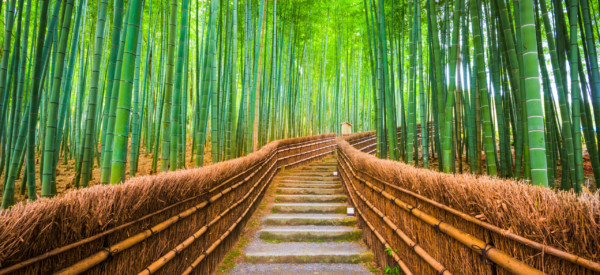 Kyoto, Japan in the bamboo forest.